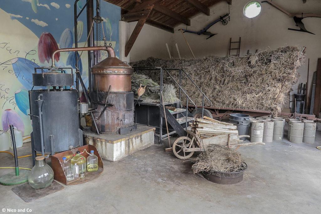ardeche-rideandpics-musse-lavande-2